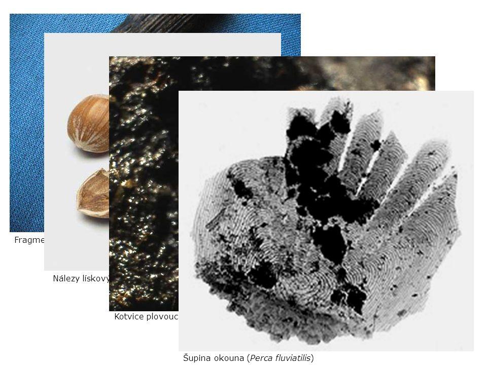 Nálezy lískových skořápek; 9280 ± 50 BP Kotvice plovoucí; těsně po 10 000 BP Fragment ratiště z borového dřeva (9500 ± 50 BP) Šupina okouna (Perca flu