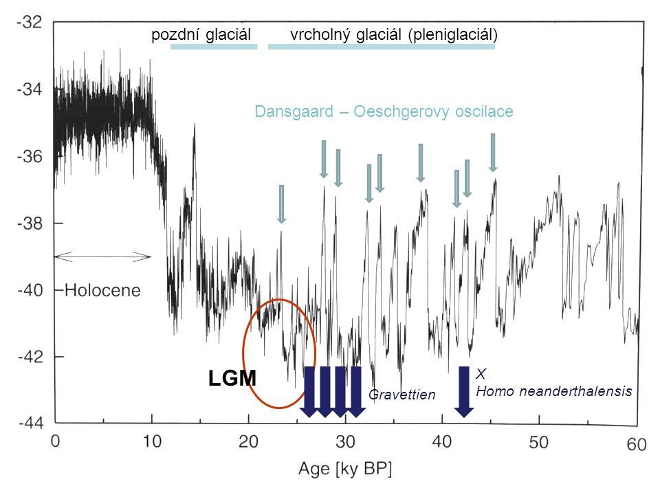 Dansgaard – Oeschgerovy oscilace X Homo neanderthalensis LGM vrcholný glaciál (pleniglaciál) Gravettien pozdní glaciál