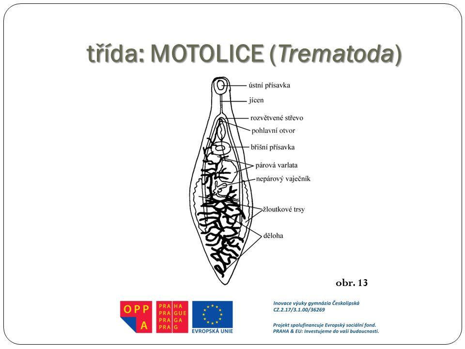třída: MOTOLICE (Trematoda) obr. 13