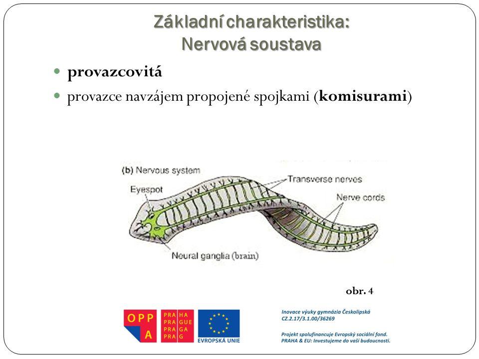 Základní charakteristika: Nervová soustava provazcovitá provazce navzájem propojené spojkami (komisurami) obr. 4