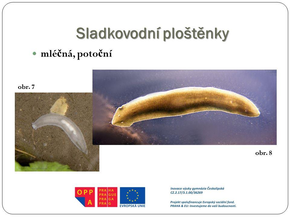 Sladkovodníploštěnky Sladkovodní ploštěnky mlé č ná, poto č ní obr. 7 obr. 8