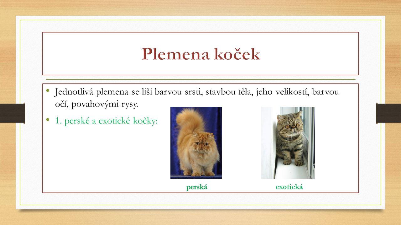 Jednotlivá plemena se liší barvou srsti, stavbou těla, jeho velikostí, barvou očí, povahovými rysy. 1. perské a exotické kočky: perskáexotická