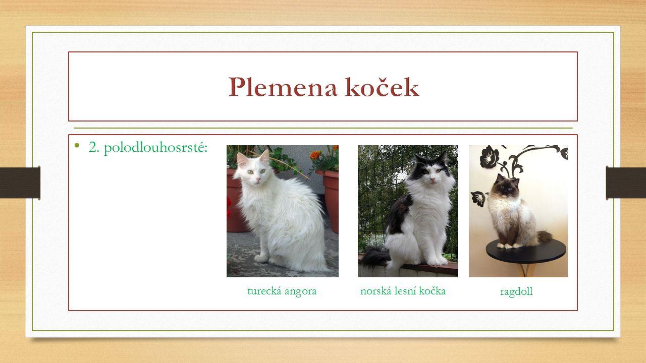 2. polodlouhosrsté: turecká angoranorská lesní kočka ragdoll