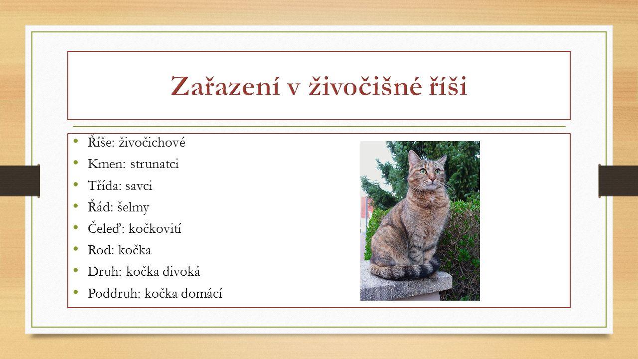 Říše: živočichové Kmen: strunatci Třída: savci Řád: šelmy Čeleď: kočkovití Rod: kočka Druh: kočka divoká Poddruh: kočka domácí