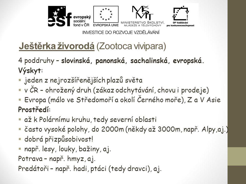 Ještěrka živorodá (Zootoca vivipara) 4 poddruhy – slovinská, panonská, sachalinská, evropská. Výskyt:  jeden z nejrozšířenějších plazů světa  v ČR –
