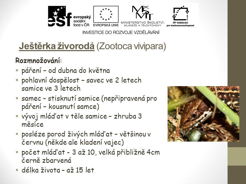 Ještěrka živorodá (Zootoca vivipara) Rozmnožování:  páření – od dubna do května  pohlavní dospělost – savec ve 2 letech samice ve 3 letech  samec –