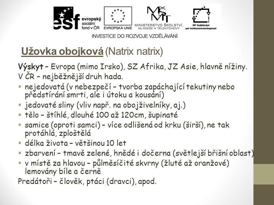 Užovka obojková (Natrix natrix) Výskyt – Evropa (mimo Irsko), SZ Afrika, JZ Asie, hlavně nížiny. V ČR – nejběžnější druh hada.  nejedovatá (v nebezpe