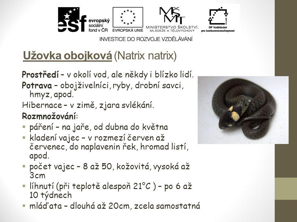 Užovka obojková (Natrix natrix) Prostředí – v okolí vod, ale někdy i blízko lidí. Potrava – obojživelníci, ryby, drobní savci, hmyz, apod. Hibernace –