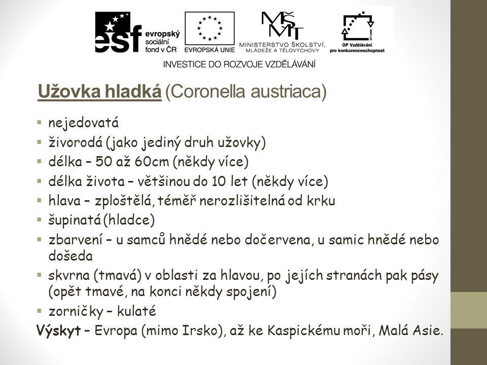 Užovka hladká (Coronella austriaca)  nejedovatá  živorodá (jako jediný druh užovky)  délka – 50 až 60cm (někdy více)  délka života – většinou do 1