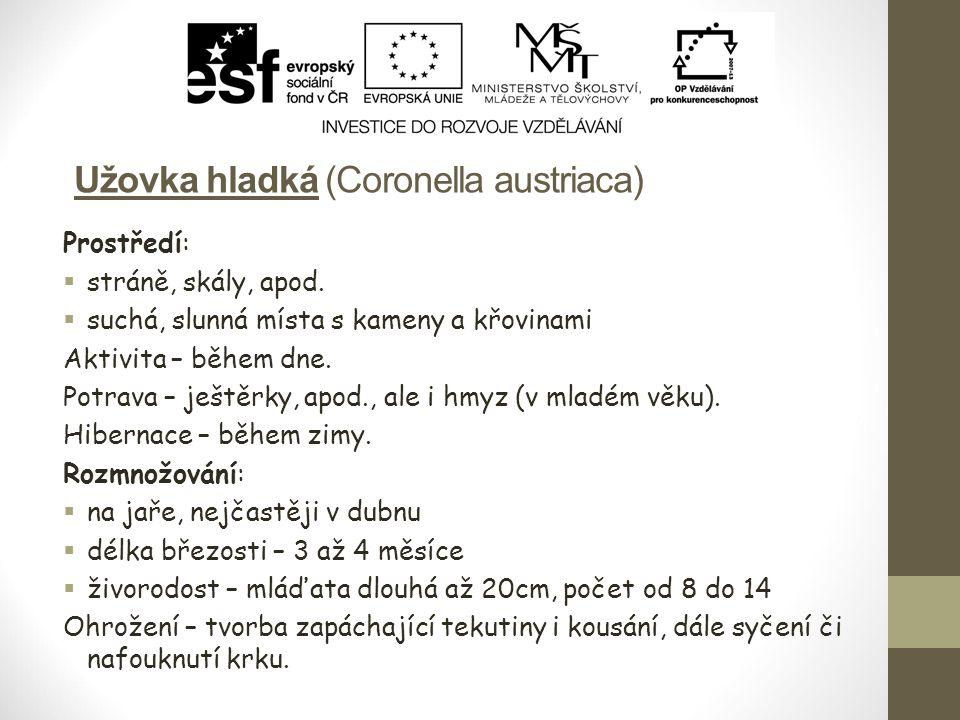 Užovka hladká (Coronella austriaca) Prostředí:  stráně, skály, apod.  suchá, slunná místa s kameny a křovinami Aktivita – během dne. Potrava – ještě