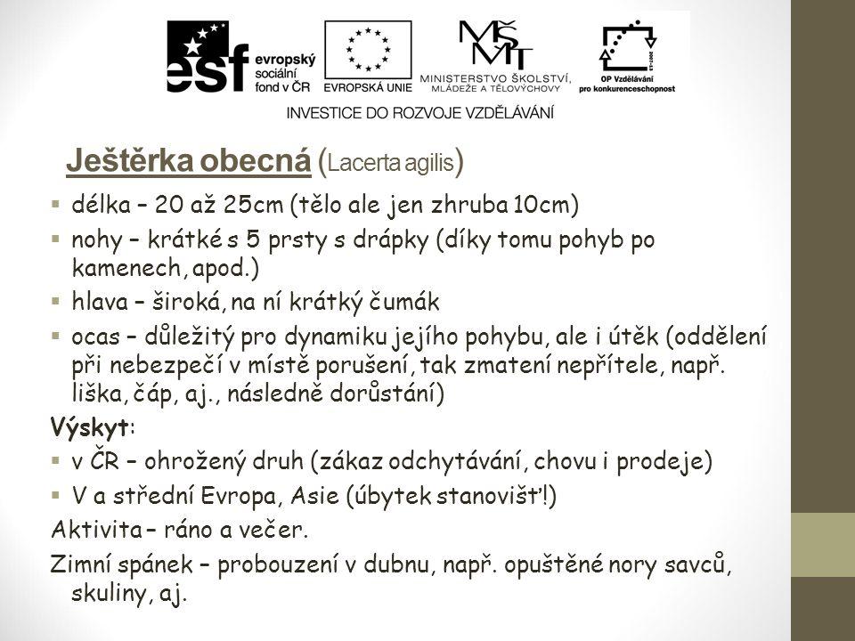 Užovka hladká (Coronella austriaca) Prostředí:  stráně, skály, apod.
