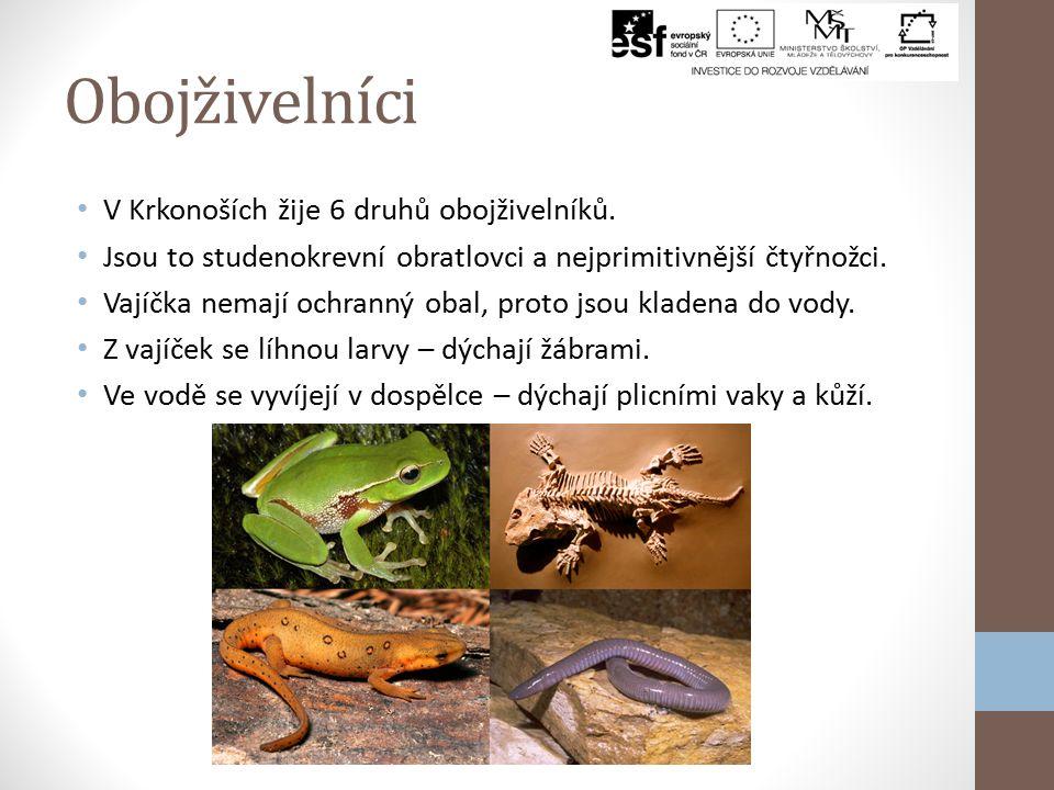 Obojživelníci V Krkonoších žije 6 druhů obojživelníků.