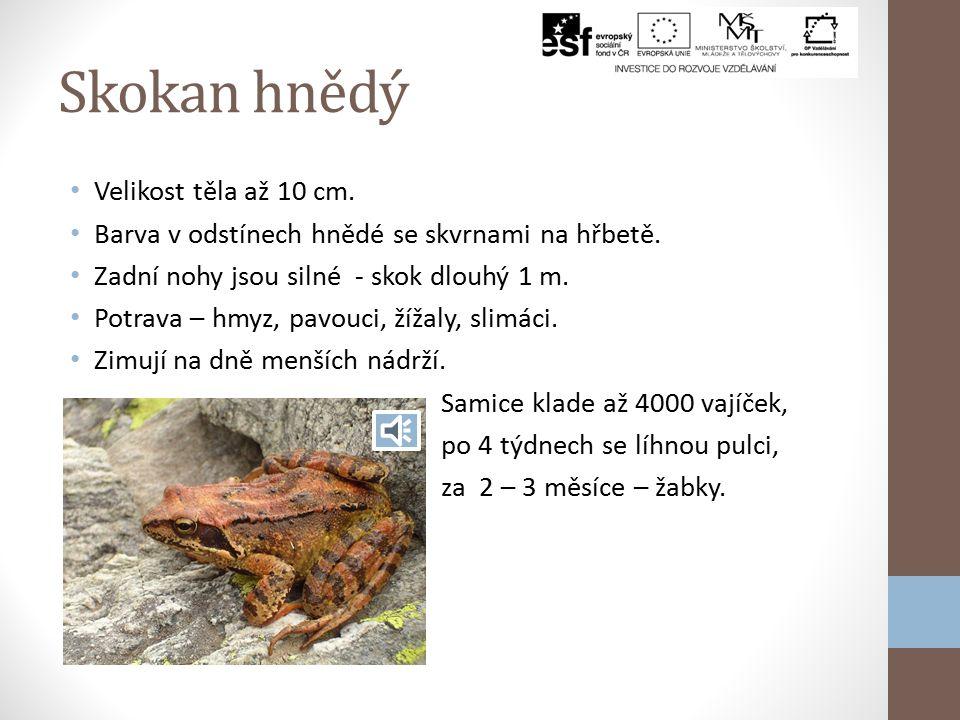 Obojživelníci V Krkonoších žije 6 druhů obojživelníků. Jsou to studenokrevní obratlovci a nejprimitivnější čtyřnožci. Vajíčka nemají ochranný obal, pr