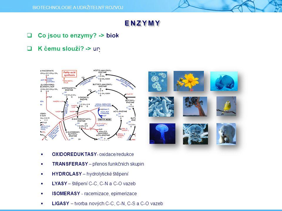 ENZYMY  Co jsou to enzymy? -> biokatalyzátory, nástroje přírody  K čemu slouží? -> urychlují přeměny látek a energie v živých organismech  OXIDORED