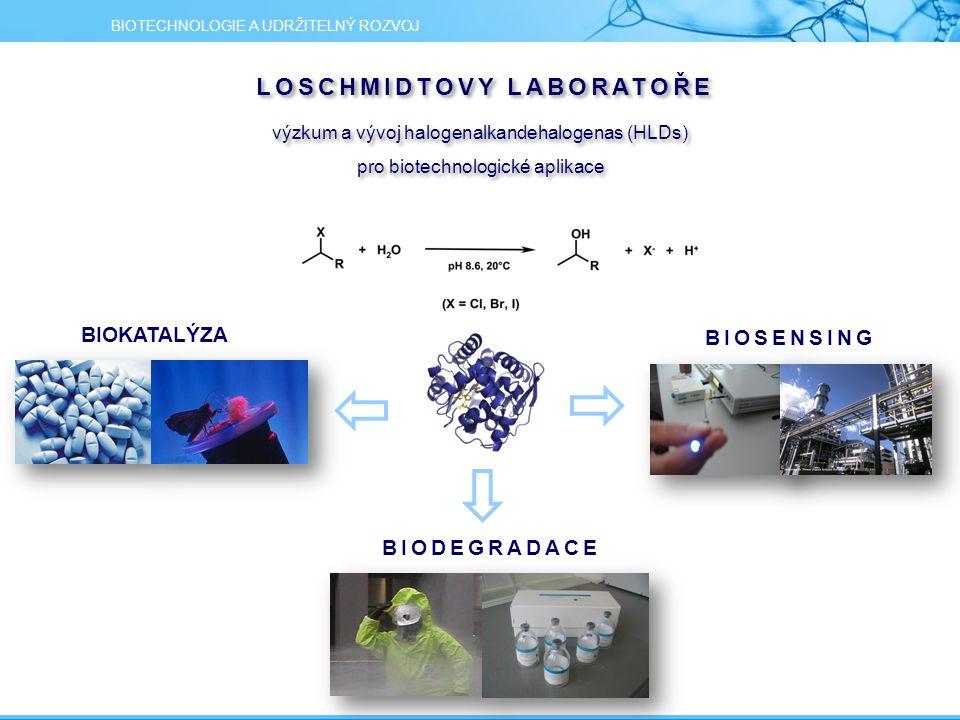 výzkum a vývoj halogenalkandehalogenas (HLDs) pro biotechnologické aplikace výzkum a vývoj halogenalkandehalogenas (HLDs) pro biotechnologické aplikace BIOSENSING BIOKATALÝZA BIODEGRADACE BIOTECHNOLOGIE A UDRŽITELNÝ ROZVOJ LOSCHMIDTOVY LABORATOŘE