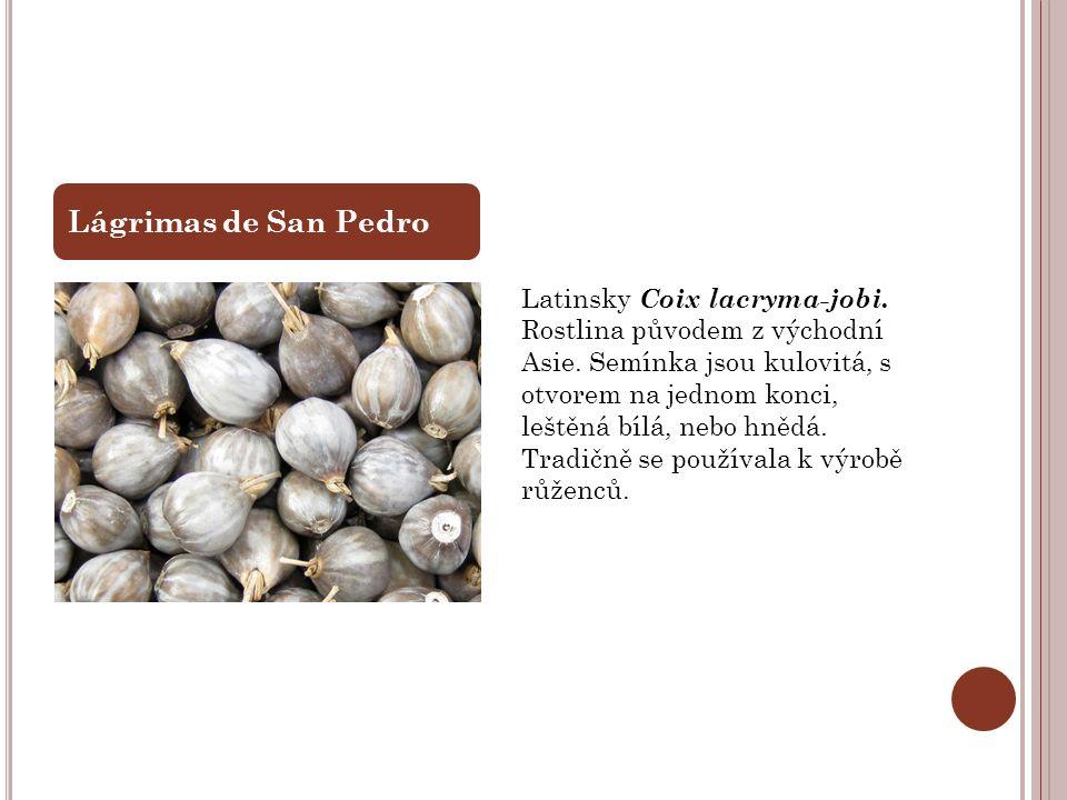 Latinsky Coix lacryma-jobi. Rostlina původem z východní Asie. Semínka jsou kulovitá, s otvorem na jednom konci, leštěná bílá, nebo hnědá. Tradičně se