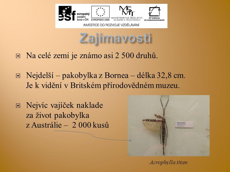  Na celé zemi je známo asi 2 500 druhů.  Nejdelší – pakobylka z Bornea – délka 32,8 cm. Je k vidění v Britském přírodovědném muzeu.  Nejvíc vajíček