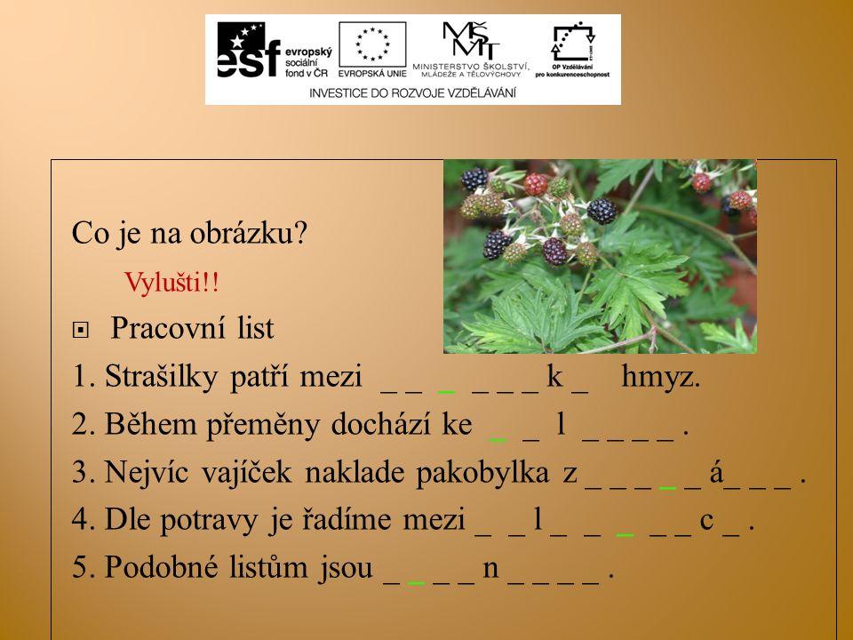 Co je na obrázku? Vylušti!!  Pracovní list 1. Strašilky patří mezi _ _ _ _ _ _ k _ hmyz. 2. Během přeměny dochází ke _ _ l _ _ _ _. 3. Nejvíc vajíček