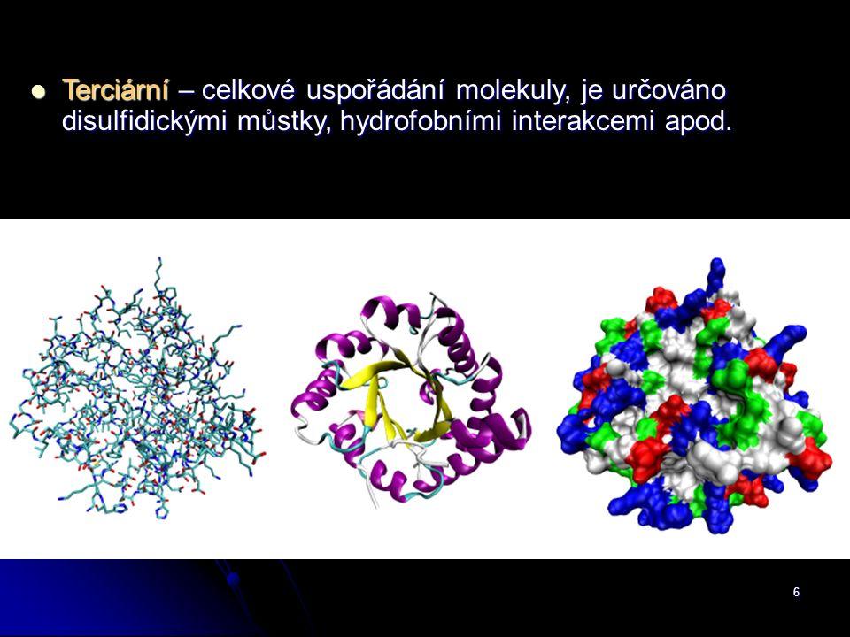 6 Terciární – celkové uspořádání molekuly, je určováno disulfidickými můstky, hydrofobními interakcemi apod. Terciární – celkové uspořádání molekuly,