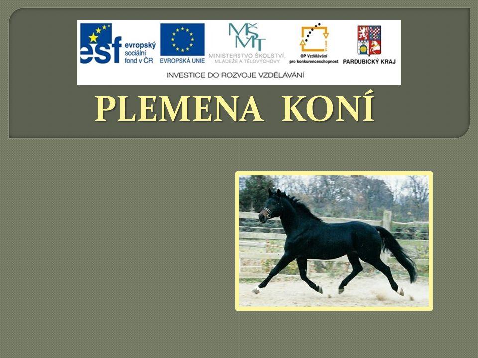 VLASTNOSTI: konstitučně tvrdý,  konstitučně tvrdý,  vynikající mechanika pohybu, vynikající skokan  náročný na podmínky chovu TYPY:  sportovní kůň  AQPS = pro překážkové dostihy (vysoký podíl A1/1)