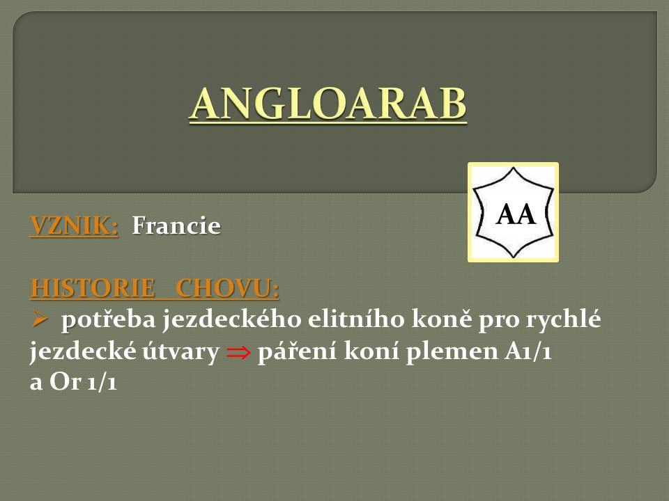 VZNIK: ČR HISTORIE CHOVU:  Původně ráz ČT = dnes samostatné plemeno (od r. 2005)!