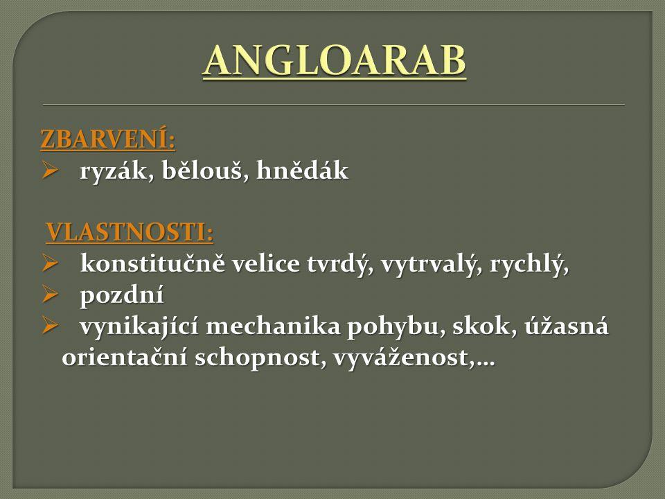 VZNIK: ČR HISTORIE CHOVU:  Původní 2 typy koní:  Český teplokrevník  Moravský teplokrevník