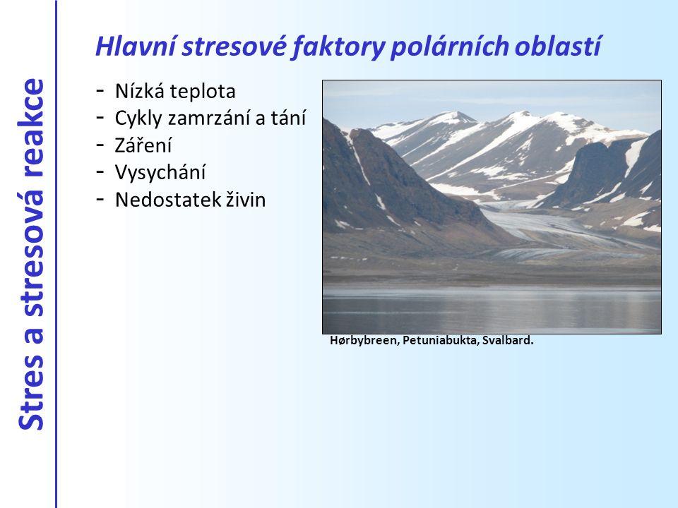 Hlavní stresové faktory polárních oblastí - Nízká teplota - Cykly zamrzání a tání - Záření - Vysychání - Nedostatek živin Hørbybreen, Petuniabukta, Sv