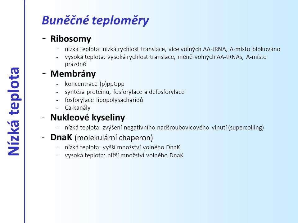 - Ribosomy - nízká teplota: nízká rychlost translace, více volných AA-tRNA, A-místo blokováno -vysoká teplota: vysoká rychlost translace, méně volných
