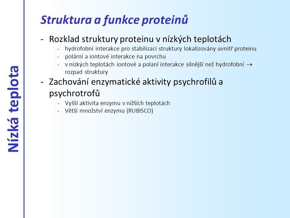 -Rozklad struktury proteinu v nízkých teplotách -hydrofobní interakce pro stabilizaci struktury lokalizovány uvnitř proteinu -polární a iontové intera