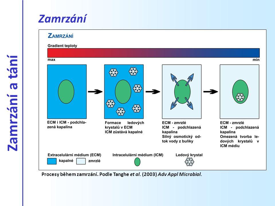 Procesy během zamrzání. Podle Tanghe et al. (2003) Adv Appl Microbiol. Zamrzání Zamrzání a tání