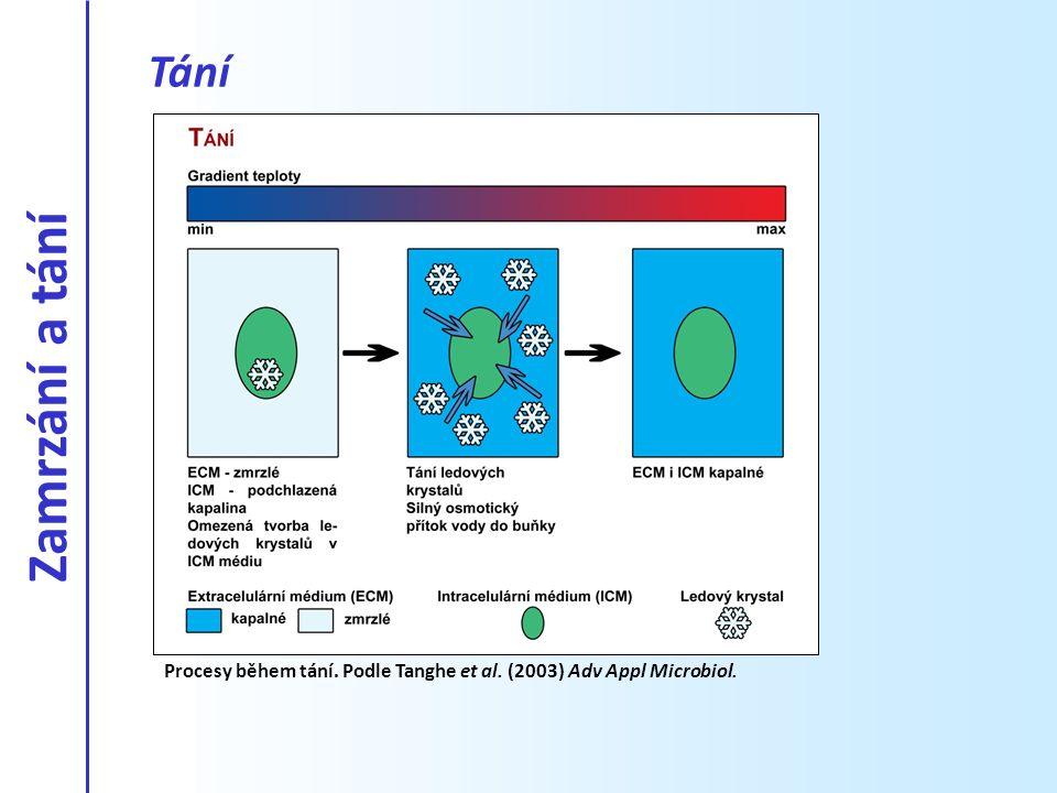 Tání Procesy během tání. Podle Tanghe et al. (2003) Adv Appl Microbiol. Zamrzání a tání