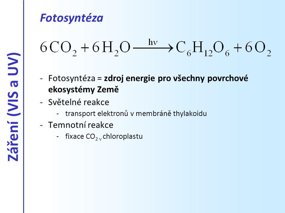 -Fotosyntéza = zdroj energie pro všechny povrchové ekosystémy Země -Světelné reakce -transport elektronů v membráně thylakoidu -Temnotní reakce -fixac