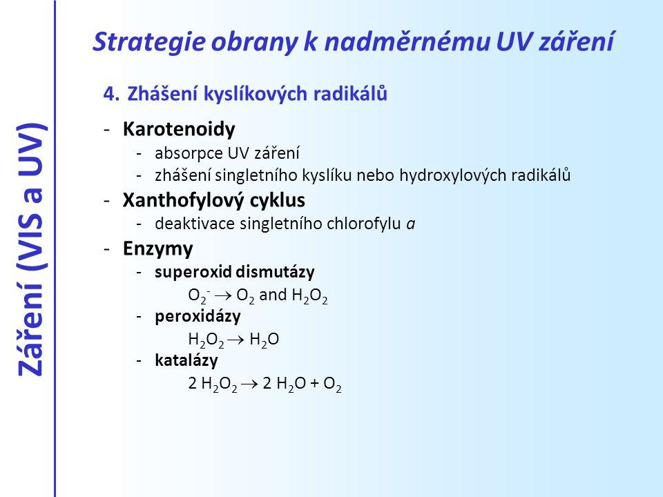 4. Zhášení kyslíkových radikálů -Karotenoidy -absorpce UV záření -zhášení singletního kyslíku nebo hydroxylových radikálů -Xanthofylový cyklus -deakti