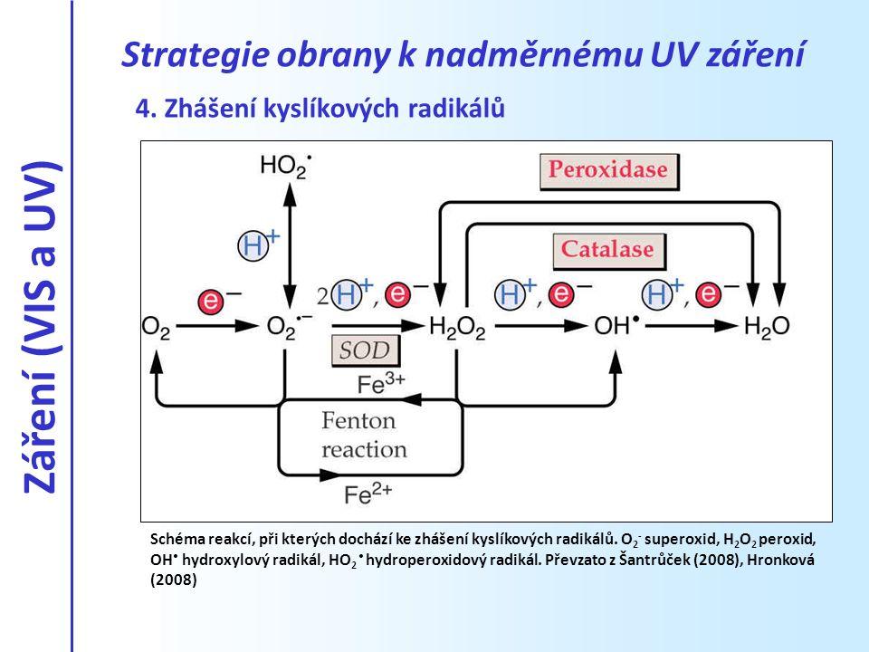 Schéma reakcí, při kterých dochází ke zhášení kyslíkových radikálů. O 2 - superoxid, H 2 O 2 peroxid, OH hydroxylový radikál, HO 2 hydroperoxidový rad