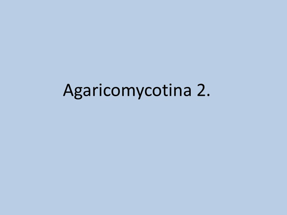 Agaricomycotina 2.
