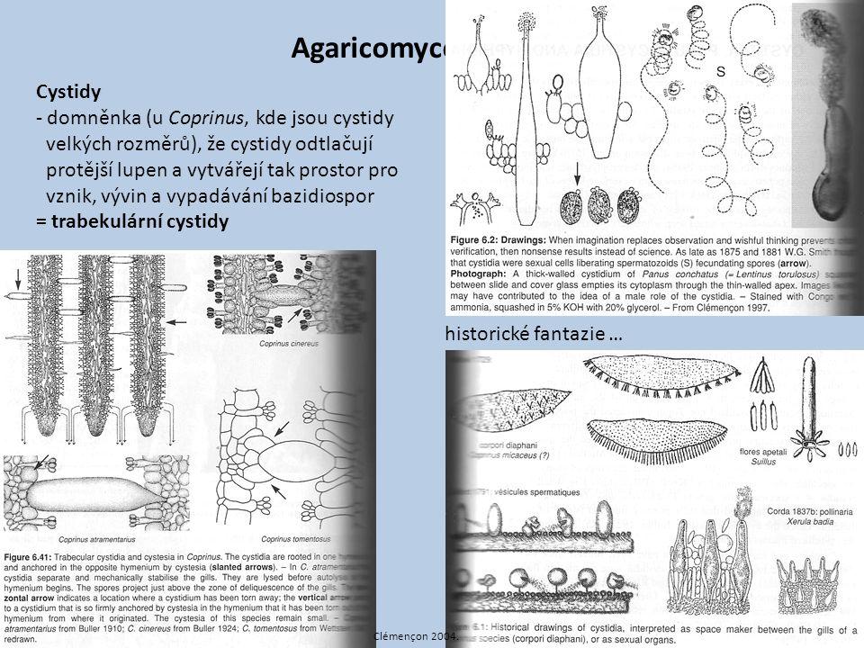Agaricomycotina Cystidy - domněnka (u Coprinus, kde jsou cystidy velkých rozměrů), že cystidy odtlačují protější lupen a vytvářejí tak prostor pro vzn