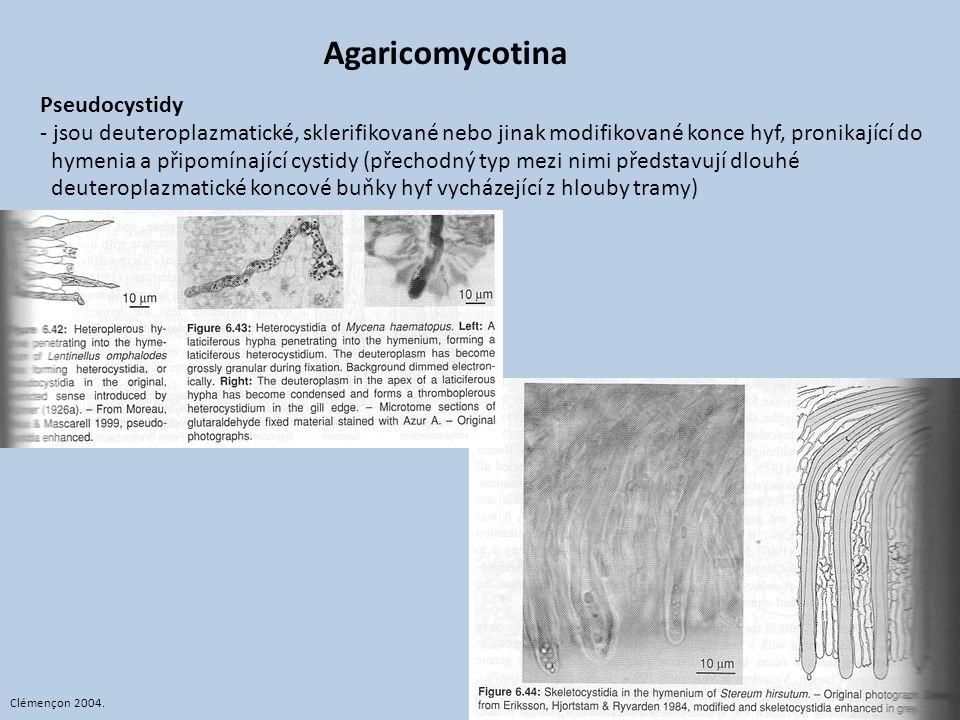 Agaricomycotina Pseudocystidy - jsou deuteroplazmatické, sklerifikované nebo jinak modifikované konce hyf, pronikající do hymenia a připomínající cyst