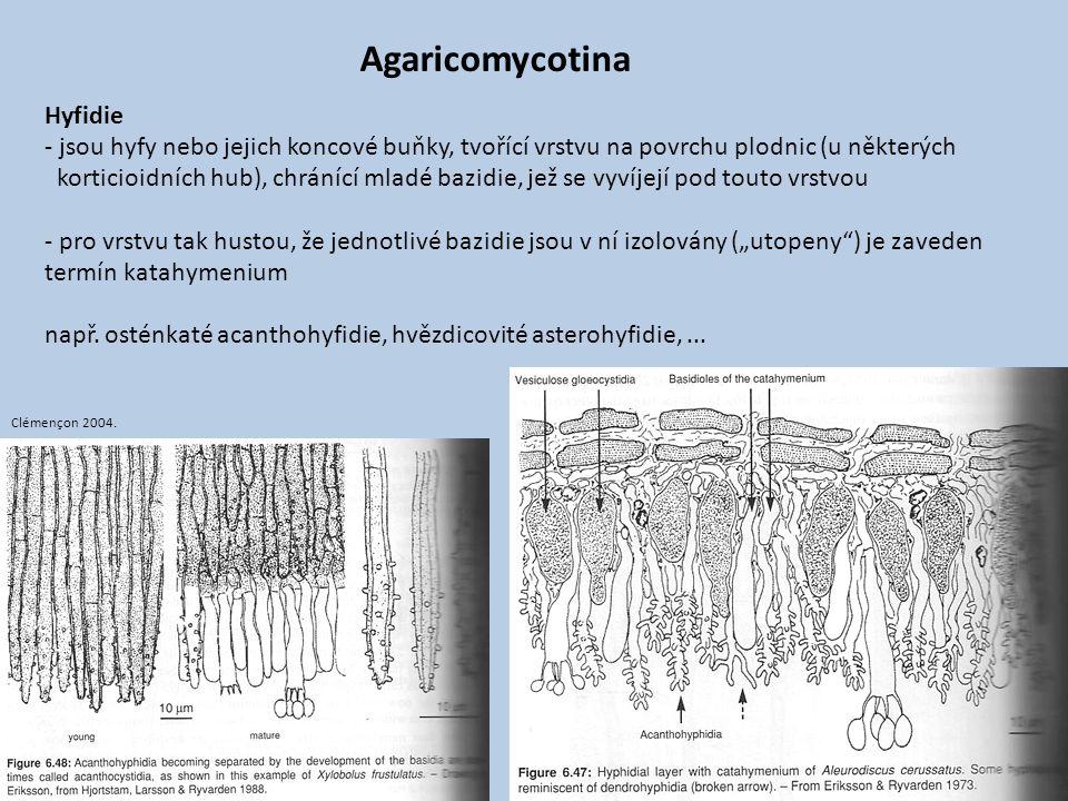 Hyfidie - jsou hyfy nebo jejich koncové buňky, tvořící vrstvu na povrchu plodnic (u některých korticioidních hub), chránící mladé bazidie, jež se vyví