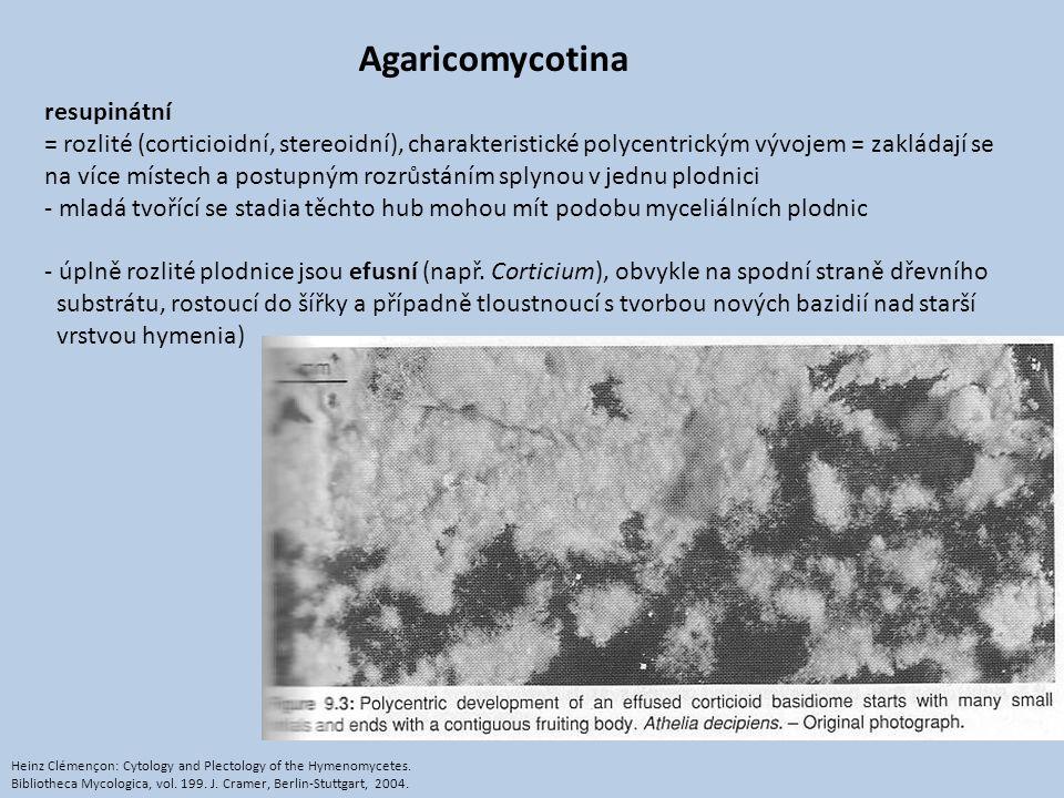 Agaricomycotina resupinátní = rozlité (corticioidní, stereoidní), charakteristické polycentrickým vývojem = zakládají se na více místech a postupným r