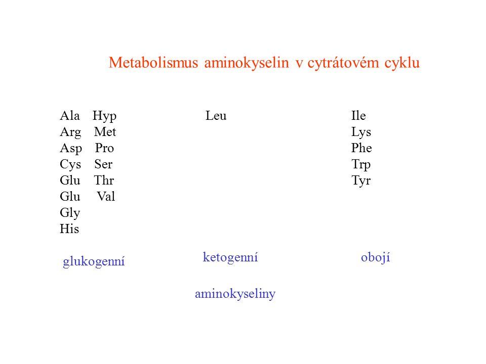 Metabolismus aminokyselin v cytrátovém cyklu Ala HypLeuIle Arg MetLys Asp ProPhe Cys SerTrp Glu ThrTyr Glu Val Gly His glukogenní ketogenníobojí amino