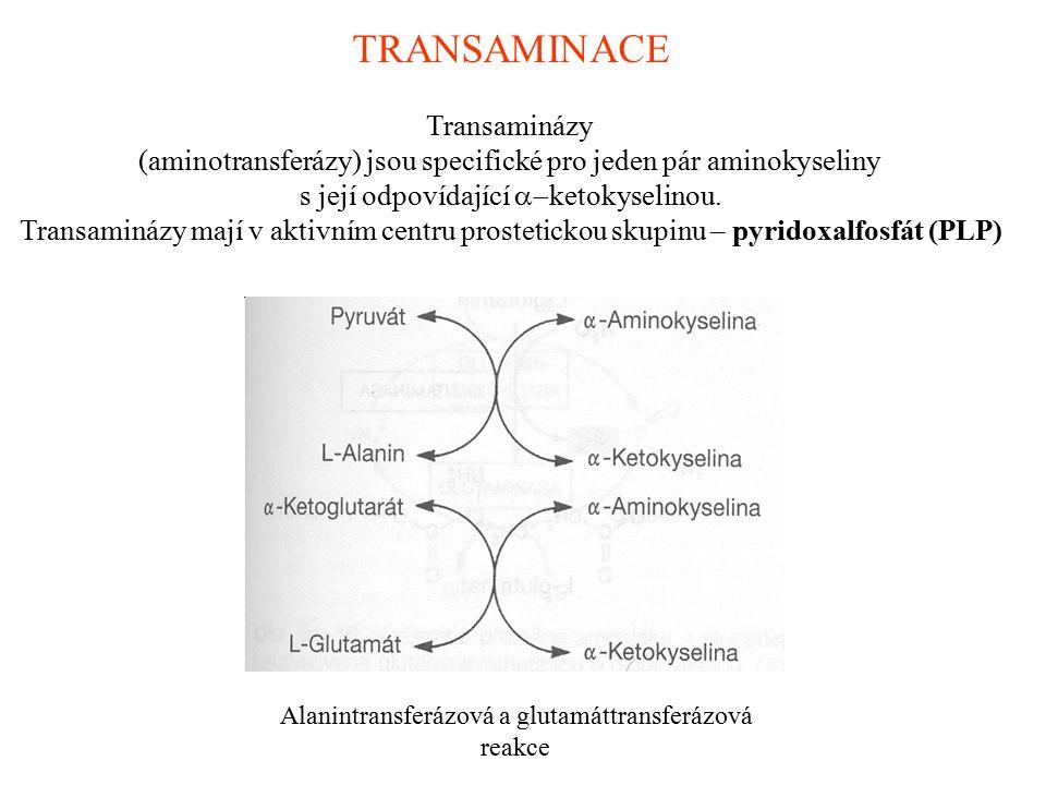TRANSAMINACE Transaminázy (aminotransferázy) jsou specifické pro jeden pár aminokyseliny s její odpovídající  ketokyselinou. Transaminázy mají v akt