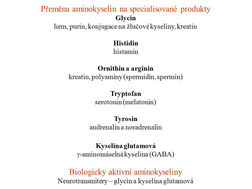Přeměna aminokyselin na specialisované produkty Glycin hem, purin, konjugace na žlučové kyseliny, kreatin Histidin histamin Ornithin a arginin kreatin