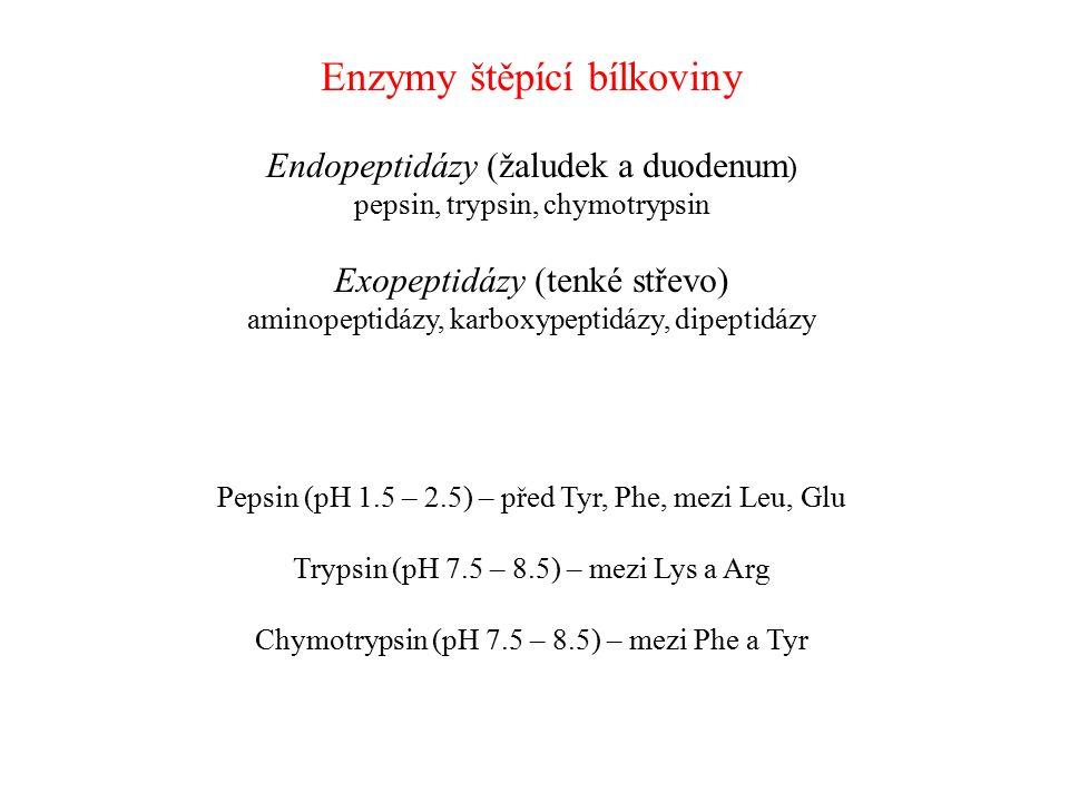 Enzymy štěpící bílkoviny Endopeptidázy (žaludek a duodenum ) pepsin, trypsin, chymotrypsin Exopeptidázy (tenké střevo) aminopeptidázy, karboxypeptidáz