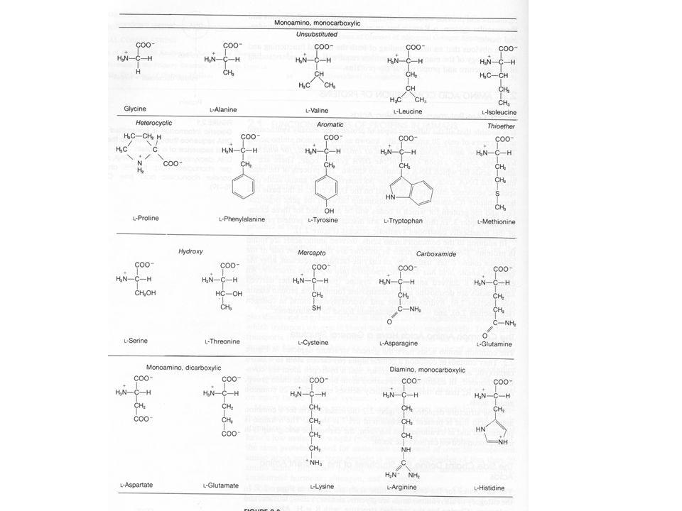 Nepostradatelné aminokyseliny (esenciální) Val, Leu Ile Phe Met, Thr, Lys, Arg *, Hys *, Trp Postradatelné aminokyseliny Gly, Ala, Ser, Pro, Hyp 1, Cys, Tyr, Asn, Gln, Asp, Glu, Hyl 1