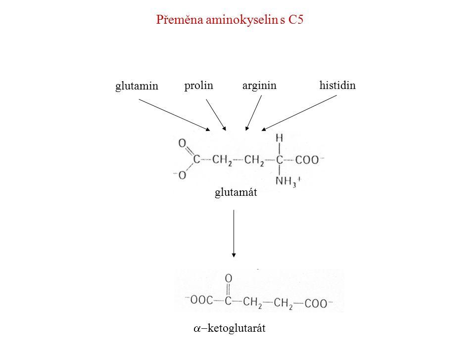 Argininprolin Ornitinpyrolin-5-karboxylát  semialdehyd glutamátu glutamát Přeměna aminokyselin s C5 Histidin urokinát 4-imidazolon-5-propionátN-formiminoglutamát glutamát