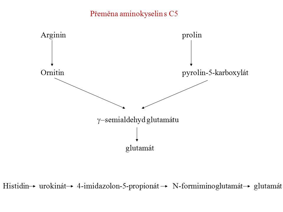 Přeměna aminokyselin a jejich meziproduktů v metabolismu cukrů glukóza glycin fosfoglycerát serin cystein pyruvátalanin arginin prolinornithin  ketoglutarát glutamát oxalacetát aspartát glykolýza Cyklus trikarbonových kyselin