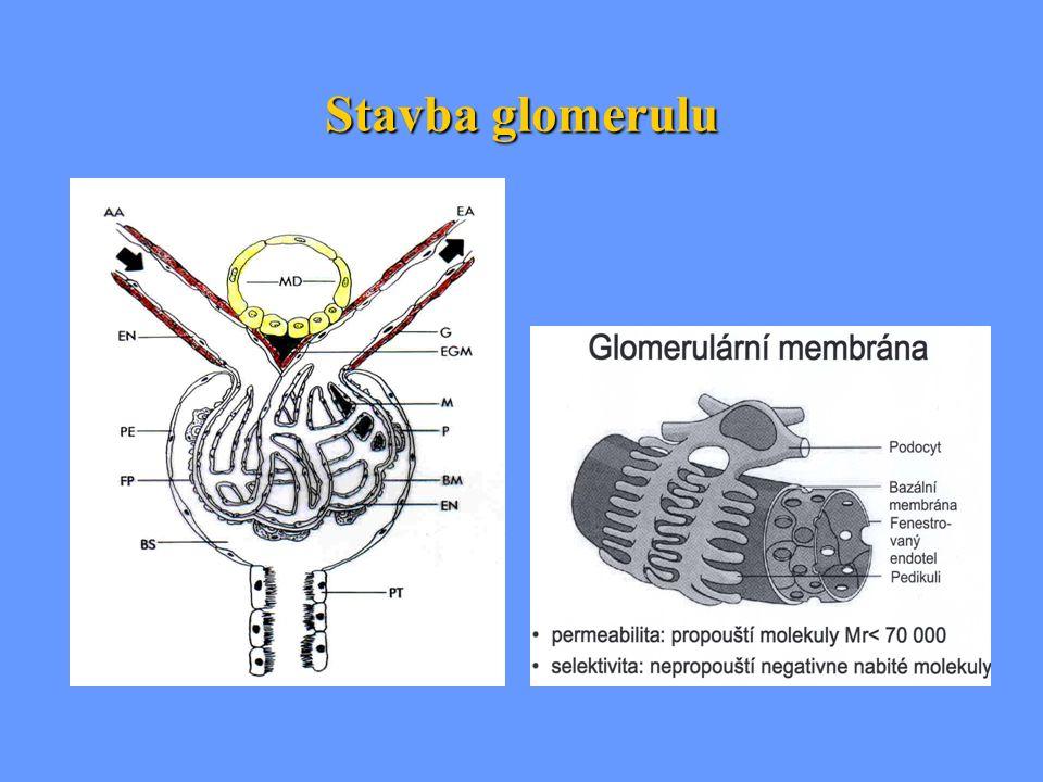 Nemoci glomerulů (glomerulopatie)  heterogenní skupina chorob Rozdělení: a) Primární glomerulopatie b) Sekundární glomerulopatie – jedním z projevů systémového, cévního, metabolického nebo – jedním z projevů systémového, cévního, metabolického nebo genetického onemocnění postihujícího i jiné orgány genetického onemocnění postihujícího i jiné orgány Častým mechanizmem vzniku glomerulopatií  imunopatologické mechanizmy imunopatologické mechanizmy