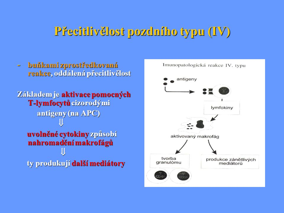 Přecitlivělost pozdního typu (IV) - buňkami zprostředkovaná reakce, oddálená přecitlivělost Základem je aktivace pomocných T-lymfocytů cizorodými anti