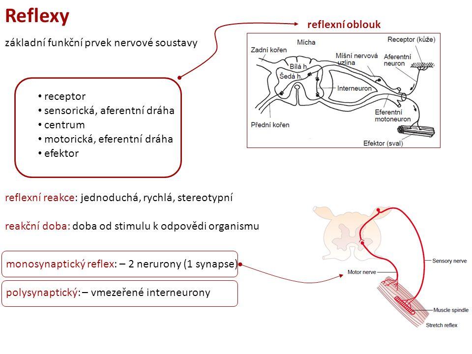 Reflexy základní funkční prvek nervové soustavy receptor sensorická, aferentní dráha centrum motorická, eferentní dráha efektor reflexní reakce: jednoduchá, rychlá, stereotypní reakční doba: doba od stimulu k odpovědi organismu reflexní oblouk monosynaptický reflex: – 2 nerurony (1 synapse) polysynaptický: – vmezeřené interneurony