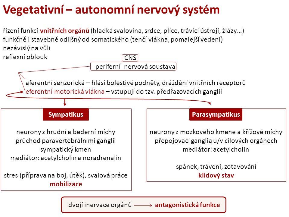 řízení funkcí vnitřních orgánů (hladká svalovina, srdce, plíce, trávicí ústrojí, žlázy…) funkčně i stavebně odlišný od somatického (tenčí vlákna, pomalejší vedení) nezávislý na vůli reflexní oblouk aferentní senzorická – hlásí bolestivé podněty, dráždění vnitřních receptorů eferentní motorická vlákna – vstupují do tzv.